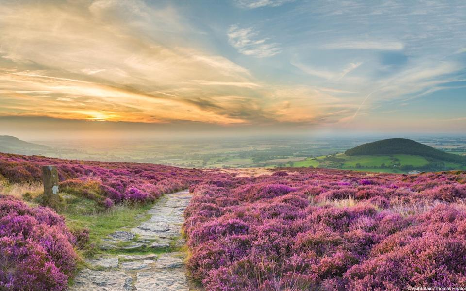 path in hills surrounded by purple gorse at sunset - VisitBritain//Thomas Heaton