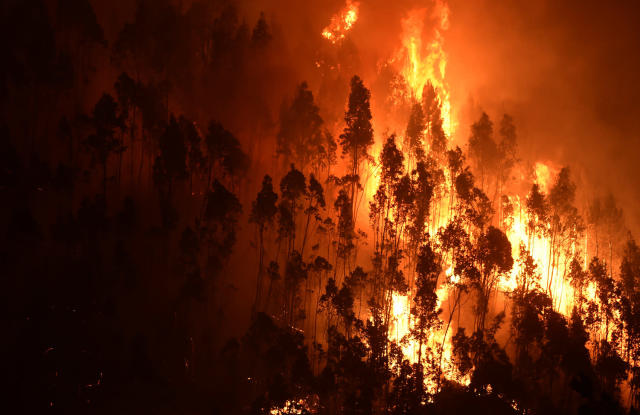<p>A forest goes up in flames during a wildfire near the village of Mega Fundeira,<br> Portugal, June 18, 2017. (Miguel Riopa/AFP/Getty Images) </p>