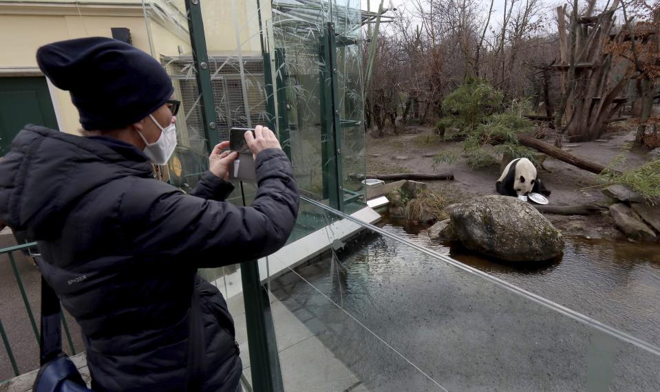 A visitor with a mask observes a big panda in an enclosure at the Schoenbrunn Zoo in Vienna, Austria, Monday, Feb. 8, 2021. Visitors can visit the zoo again after 97 days lock down. The Austrian government has moved to restrict freedom of movement for people, in an effort to slow the onset of the COVID-19 coronavirus. (AP Photo/Ronald Zak)
