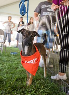 Pet Food Express Pet Fair (9/1-30) to Find Forever Homes for 7,000 Rescued Animals like this Pup // PHOTO CREDIT: Ellen Shershow