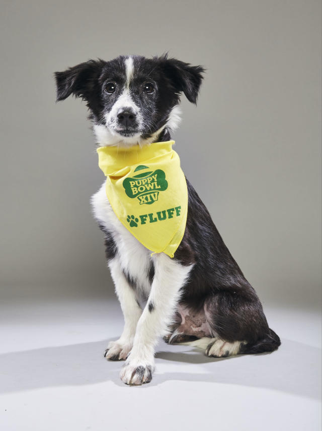 <p>Team: Fluff<br> From: Compassion Without Borders<br> (Photo: Animal Planet) </p>
