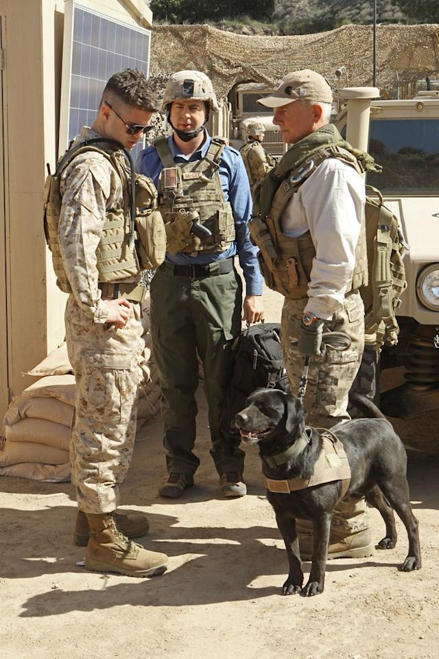 """Seek"" -- The wife of a Marine who specialized in K-9 bomb detection urges the NCIS team to investigate the recent death of her husband in Afghanistan."