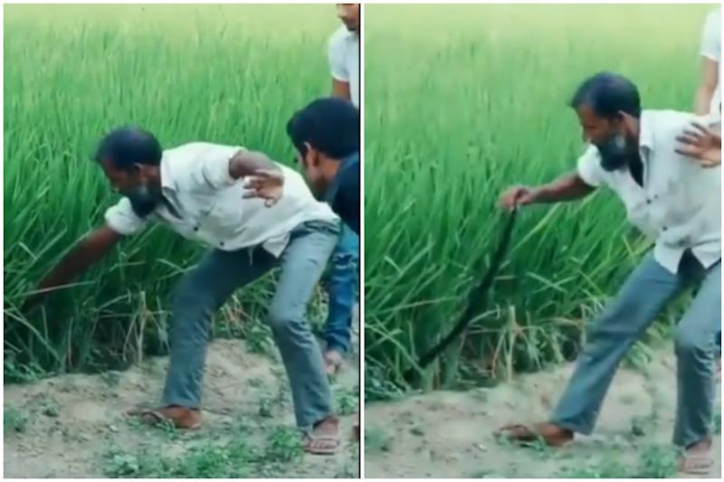 Watch: Man's Quest to Catch 'Snake' in Field Leaves Netizens Fooled