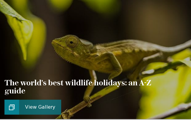 The world's best wildlife holidays: an A-Z guide