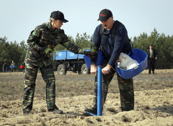 FILE In this file photo taken on Saturday, April 25, 2020, Belarus President Alexander Lukashenko, right, plants young trees during a subbotnik, a Soviet-style Clean-up Day, in the village of Liaskovichi, about 270 km (169 miles) south of Minsk, Belarus. Lukashenko refused to impose any restrictions, making Belarus the only country in Europe to continue playing professional soccer games with fans in the stands while the outbreak was in full swing. Religious service and other mass gatherings went on unimpeded, and the nation had a massive military parade in May to mark the 75th anniversary of the Nazi defeat in World War II. (Maxim Guchek/BelTA Pool Photo via AP, File)