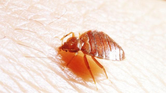 Top City for Bedbugs Named