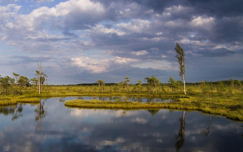 soomaa national park, estonia - Getty