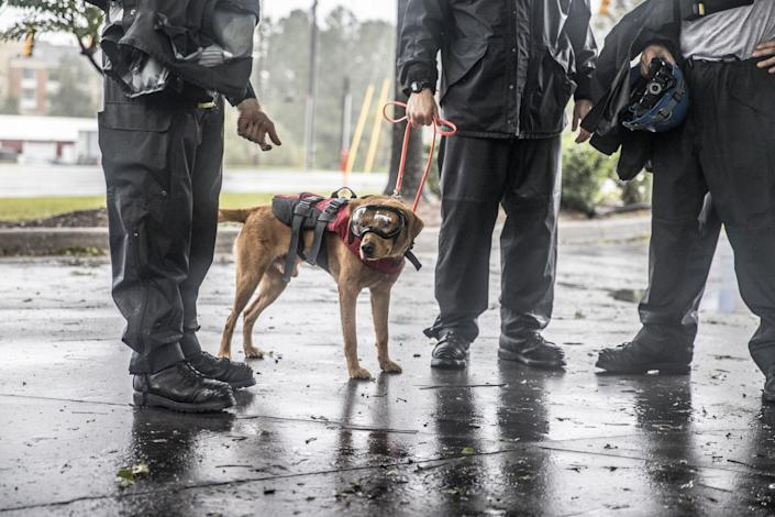 Rescue workers stand with a search dog as they prepare to continue rescue efforts after Hurricane Florence in Wilmington, North Carolina, U.S., on Saturday, Sept. 15, 2018.