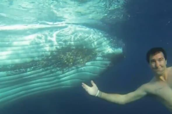 adventurers go swimming with humpback whales