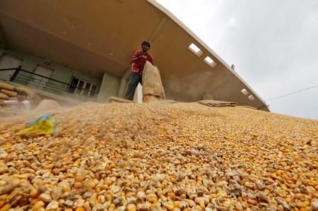 India lowers duty on 400,000 T of corn imports as prices jump