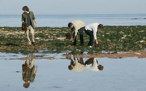 Seaweed foraging in Kent - Credit: Roger Taylor