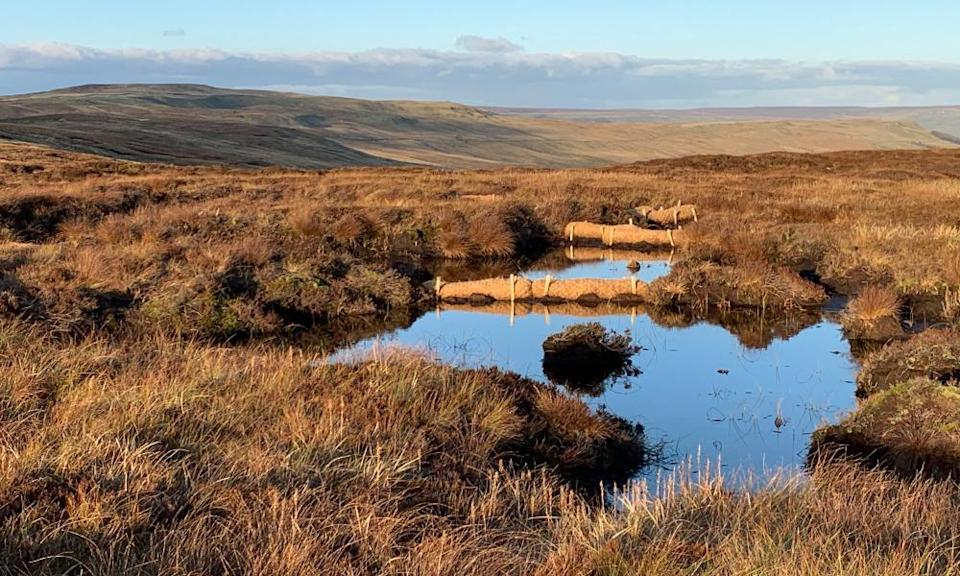 The Great North Bog