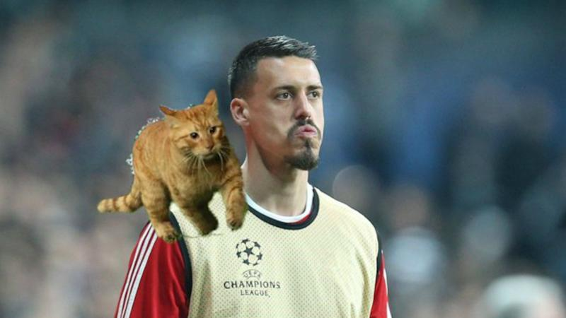 Man of the match Wednesday, charged Thursday - cat pitch invader lands Besiktas in trouble