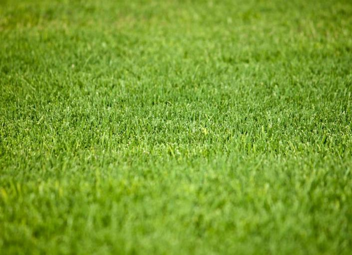 """<body> <p>If you're interested in more lawn tips, consider; </p> <p><a rel=""""nofollow noopener"""" href="""" http://www.bobvila.com/slideshow/top-5-tips-for-a-greener-lawn-2389#.VW3GVs9ViT4?bv=yahoo"""" target=""""_blank"""" data-ylk=""""slk:Top 5 Tips for a Greener Lawn"""" class=""""link rapid-noclick-resp"""">Top 5 Tips for a Greener Lawn</a> </p> <p><a rel=""""nofollow noopener"""" href="""" http://www.bobvila.com/slideshow/ultimate-lawn-care-guide-12-steps-to-a-prize-winning-yard-44680#.VW3Gbc9ViT4?bv=yahoo"""" target=""""_blank"""" data-ylk=""""slk:Ultimate Lawn Care Guide: 12 Steps to a Prize-Winning Yard"""" class=""""link rapid-noclick-resp"""">Ultimate Lawn Care Guide: 12 Steps to a Prize-Winning Yard</a> </p> <p><a rel=""""nofollow noopener"""" href="""" http://www.bobvila.com/slideshow/rejuvenate-your-lawn-with-7-spring-musts-48676#.VW3Gds9ViT4?bv=yahoo"""" target=""""_blank"""" data-ylk=""""slk:Rejuvenate Your Lawn with 7 Spring Musts"""" class=""""link rapid-noclick-resp"""">Rejuvenate Your Lawn with 7 Spring Musts</a> </p> </body>"""