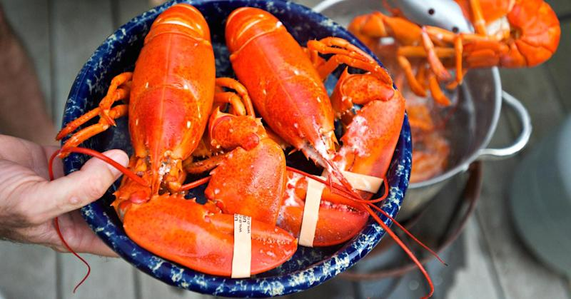 Treating warts with a lobster's blood? This Maine researcher is out to prove it can be done