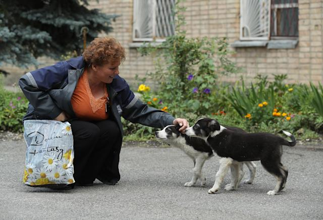 <p>Administration worker Lyudmila Ivanovna greets stray puppies inside the exclusion zone at the Chernobyl nuclear power plant on Aug. 18, 2017, near Chernobyl, Ukraine. (Photo: Sean Gallup/Getty Images) </p>
