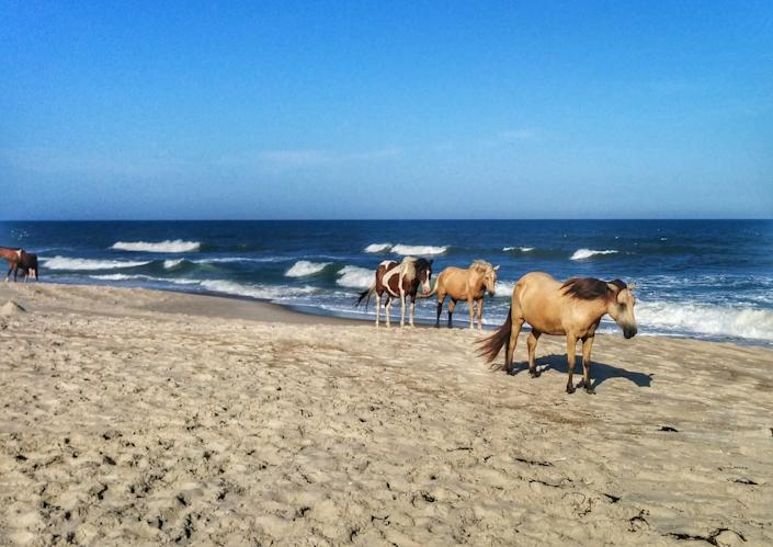 Oysters and wild horses on Virginia's Chincoteague Island