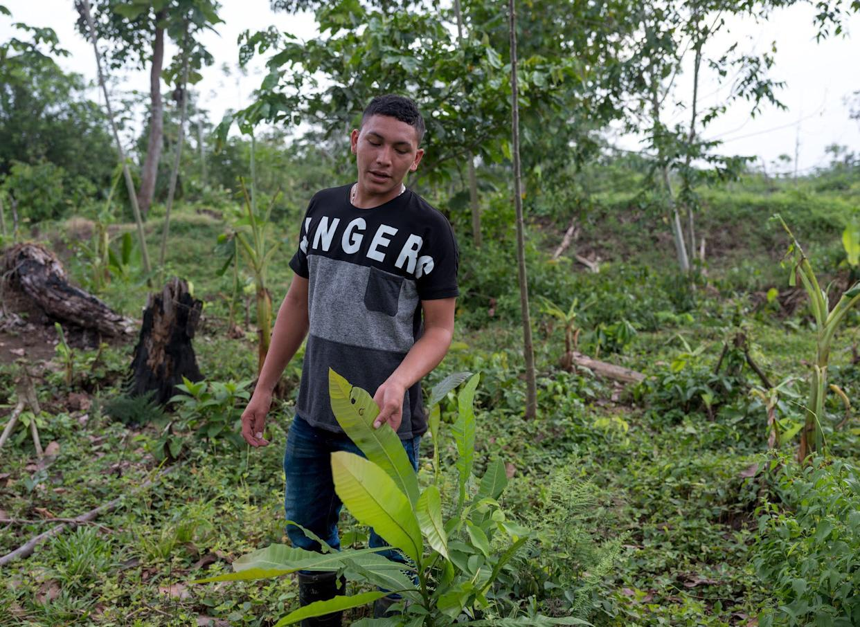Ramón Bedoya gives a tour of the land that his family owns, showing the diverse flora that has been threatened by oil palm plantations. (Photo: Thom Pierce | Guardian | Global Witness | UN Environment)