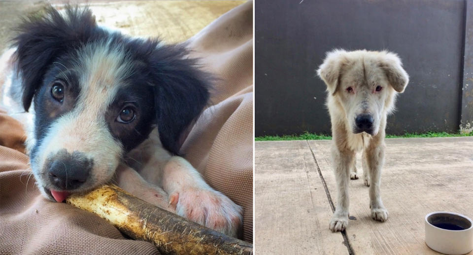 Two dogs rescued by the organisation. Source: Angela Glover