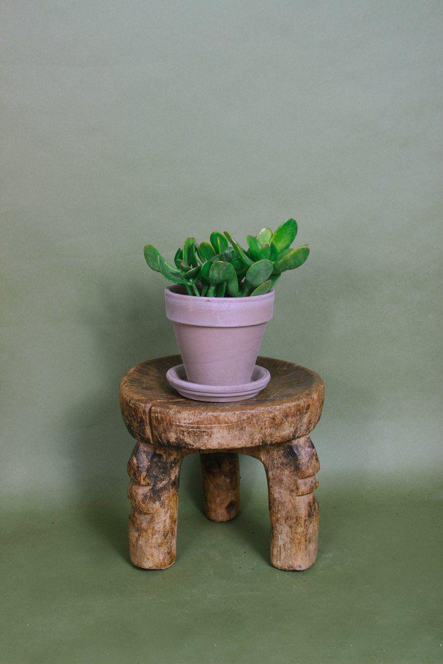"""<p><strong>Grounded Plants</strong></p><p>grounded-plants.com</p><p><strong>$15.00</strong></p><p><a href=""""https://grounded-plants.com/collections/beginner-friendly-plants/products/jade-plant"""" rel=""""nofollow noopener"""" target=""""_blank"""" data-ylk=""""slk:Shop Now"""" class=""""link rapid-noclick-resp"""">Shop Now</a></p><p>An under-$20 gorgeous plant that only needs to be watered once a week and is a symbol of good luck? SAY. LESS.</p>"""