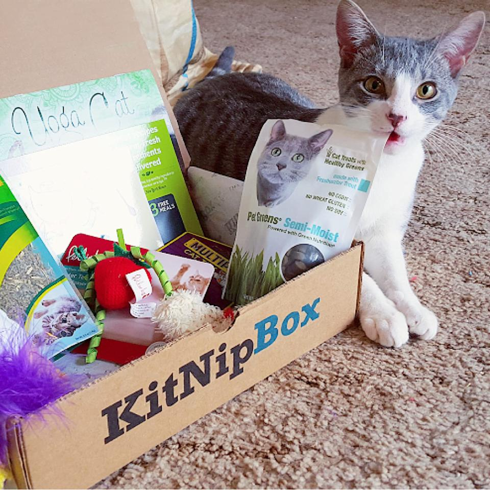 KitNipBox subscription boxes (Photo: Amazon)