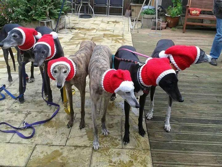 """<p>Jan Brown, 52, from Seaburn, England, knits sweaters, hats, and neck warmers for rescued greyhounds — and not just because they're completely adorable. <i>(Photo: Jan Brown via <a href=""""https://www.facebook.com/KnittedDogClothes/photos_stream"""">Facebook</a>)</i><br /></p>"""