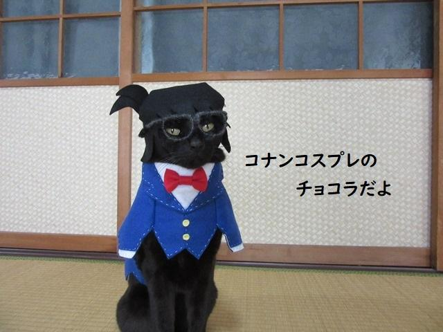 Cat cosplayer from Japan, Chocola, whose owner has hand-made 114 costumes for it, as Conan Edogawa from Detective Conan. (Photo: Twitter/@kigurumicyokor1)