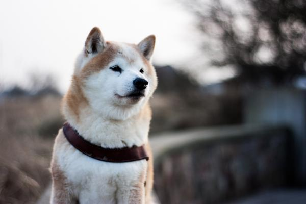 , Here's What It Would Take For Shiba Inu To Overtake Dogecoin