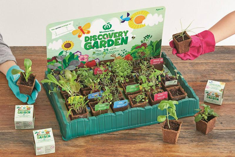 The Woolies Discovery Garden promotion is all the rage, but keeping the plants going is a challenge. Photo: Woolworths