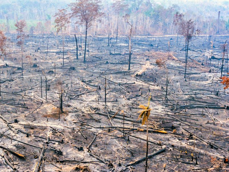 Over 4.6 million hectares of the Amazon rainforest have been burnt this year alone (Getty Images/iStockphoto)