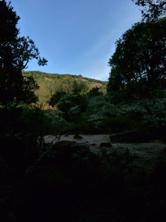 The view of the grassland from within the cool darkness of the shola forest.