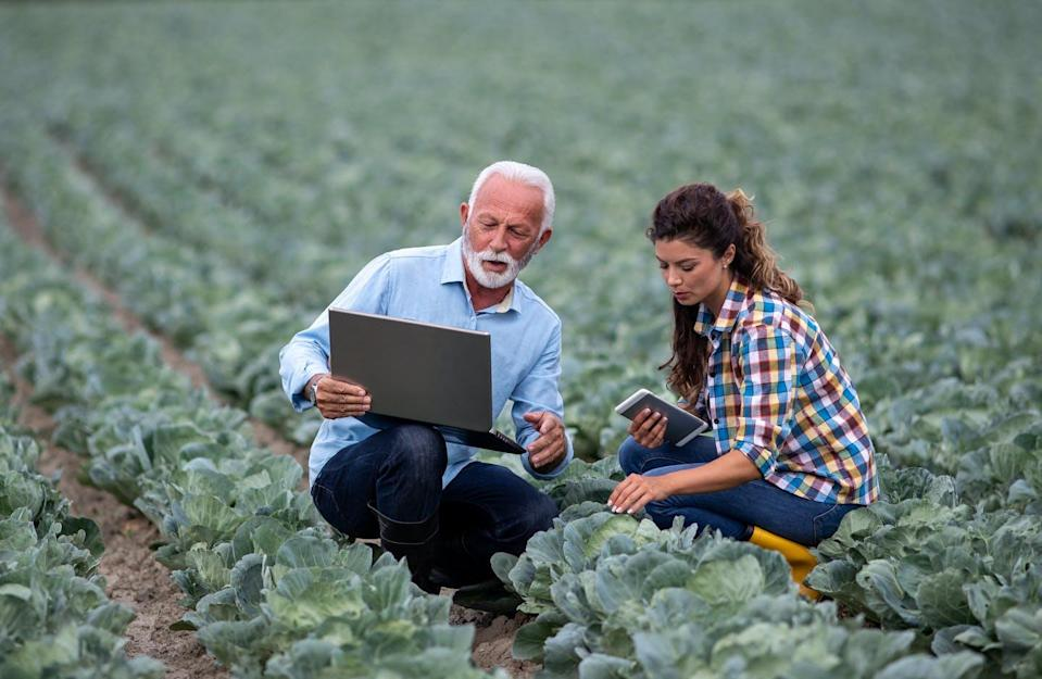 A white haired bearded man in a farmer's field with a younger woman looking at a laptop.