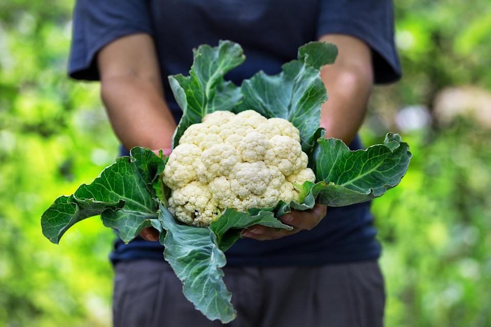 """<p>Cauliflower season varies across the U.S., but its peak tends to be from September through November. Embrace the flavors of fall with <a href=""""https://www.thedailymeal.com/recipes/curried-cauliflower-and-carrots-recipe-0?referrer=yahoo&category=beauty_food&include_utm=1&utm_medium=referral&utm_source=yahoo&utm_campaign=feed"""" rel=""""nofollow noopener"""" target=""""_blank"""" data-ylk=""""slk:curried cauliflower"""" class=""""link rapid-noclick-resp"""">curried cauliflower</a> or <a href=""""https://www.thedailymeal.com/recipes/everything-roasted-cauliflower-recipe?referrer=yahoo&category=beauty_food&include_utm=1&utm_medium=referral&utm_source=yahoo&utm_campaign=feed"""" rel=""""nofollow noopener"""" target=""""_blank"""" data-ylk=""""slk:everything roasted cauliflower"""" class=""""link rapid-noclick-resp"""">everything roasted cauliflower</a>. Cauliflower also has plenty of creative uses beyond """"side dish."""" Use it in vegetarian-friendly versions of classic bar bites, like <a href=""""https://www.thedailymeal.com/recipes/vegetarian-buffalo-chicken-dip-recipe-recipe?referrer=yahoo&category=beauty_food&include_utm=1&utm_medium=referral&utm_source=yahoo&utm_campaign=feed"""" rel=""""nofollow noopener"""" target=""""_blank"""" data-ylk=""""slk:vegetarian Buffalo dip"""" class=""""link rapid-noclick-resp"""">vegetarian Buffalo dip</a> or <a href=""""https://www.thedailymeal.com/recipes/korean-air-fried-cauliflower-recipe?referrer=yahoo&category=beauty_food&include_utm=1&utm_medium=referral&utm_source=yahoo&utm_campaign=feed"""" rel=""""nofollow noopener"""" target=""""_blank"""" data-ylk=""""slk:Korean-fried cauliflower"""" class=""""link rapid-noclick-resp"""">Korean-fried cauliflower</a>. It also does well as a swap for grains, like in this <a href=""""https://www.thedailymeal.com/recipes/roasted-cauliflower-couscous-salad-pickled-apricots-carrot-top-salsa-verde-recipe?referrer=yahoo&category=beauty_food&include_utm=1&utm_medium=referral&utm_source=yahoo&utm_campaign=feed"""" rel=""""nofollow noopener"""" target=""""_blank"""" data-ylk=""""slk:""""couscous"""" recipe"""" class=""""link rapid-noclick-resp"""">""""c"""
