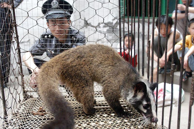 A policeman watching over a civet cat captured in the wild by a farmer in Wuhan, in central China's Hubei province: AFP