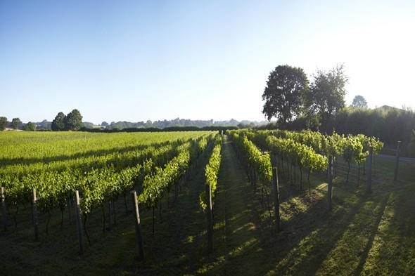 Take three: British vineyards