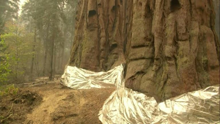 California's sequoias wrapped in foil as governor signs climate bill (AFP/Gilles CLARENNE)
