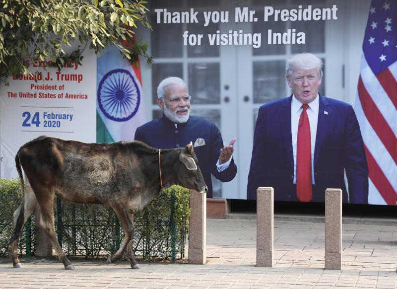 A cow walks past a banner welcoming U.S. President Donald Trump, in Agra, India, Monday, Feb. 24, 2020. Trump is expected to travel to the Taj Mahal, the 17th century monument to love later Monday. (AP Photo/Rajesh Kumar Singh)