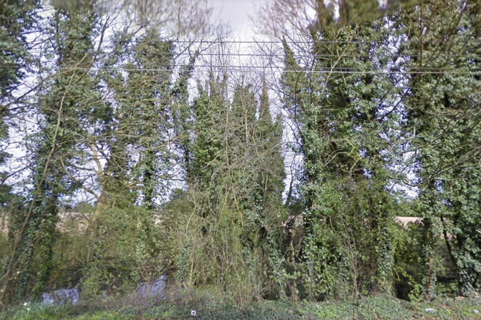 Pictured are bushes in Wisbech.