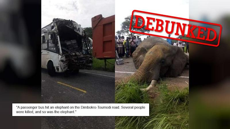 Was an elephant in Ivory Coast really fatally hit by a bus?