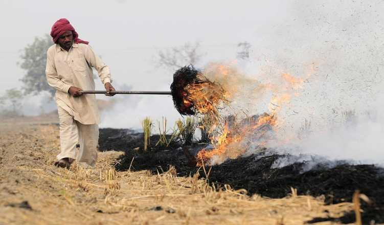 NGT directs Agri Min to submit report on steps taken to stop crop burning