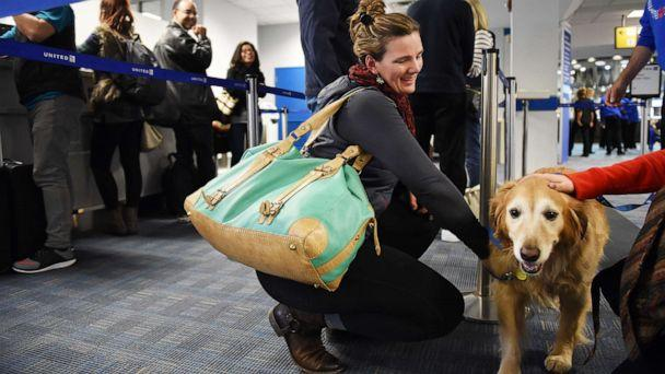 PHOTO: A woman pets a golden retriever that was part of United Paws, a United Airlines program that allows passengers to interact with comfort dogs at Washington Dulles International Airport in Dulles, Va., Dec. 21, 2015. (The Washington Post via Getty Images, FILE)