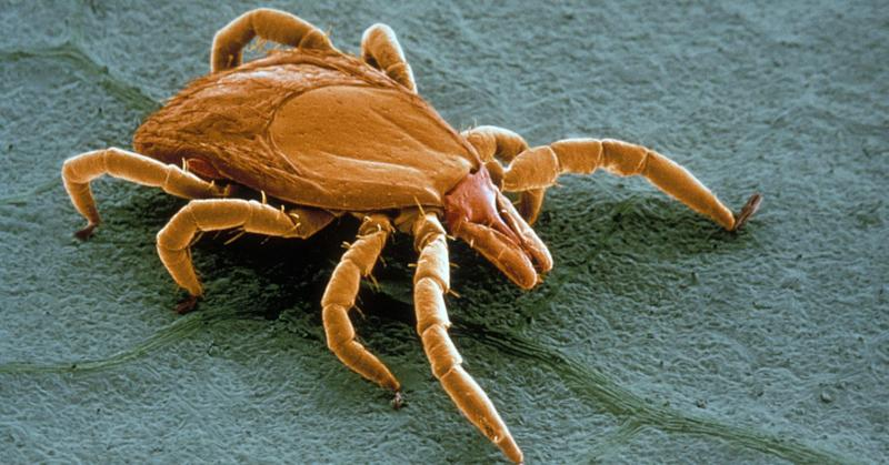 One sign that 2017 will be a bad year for Lyme disease