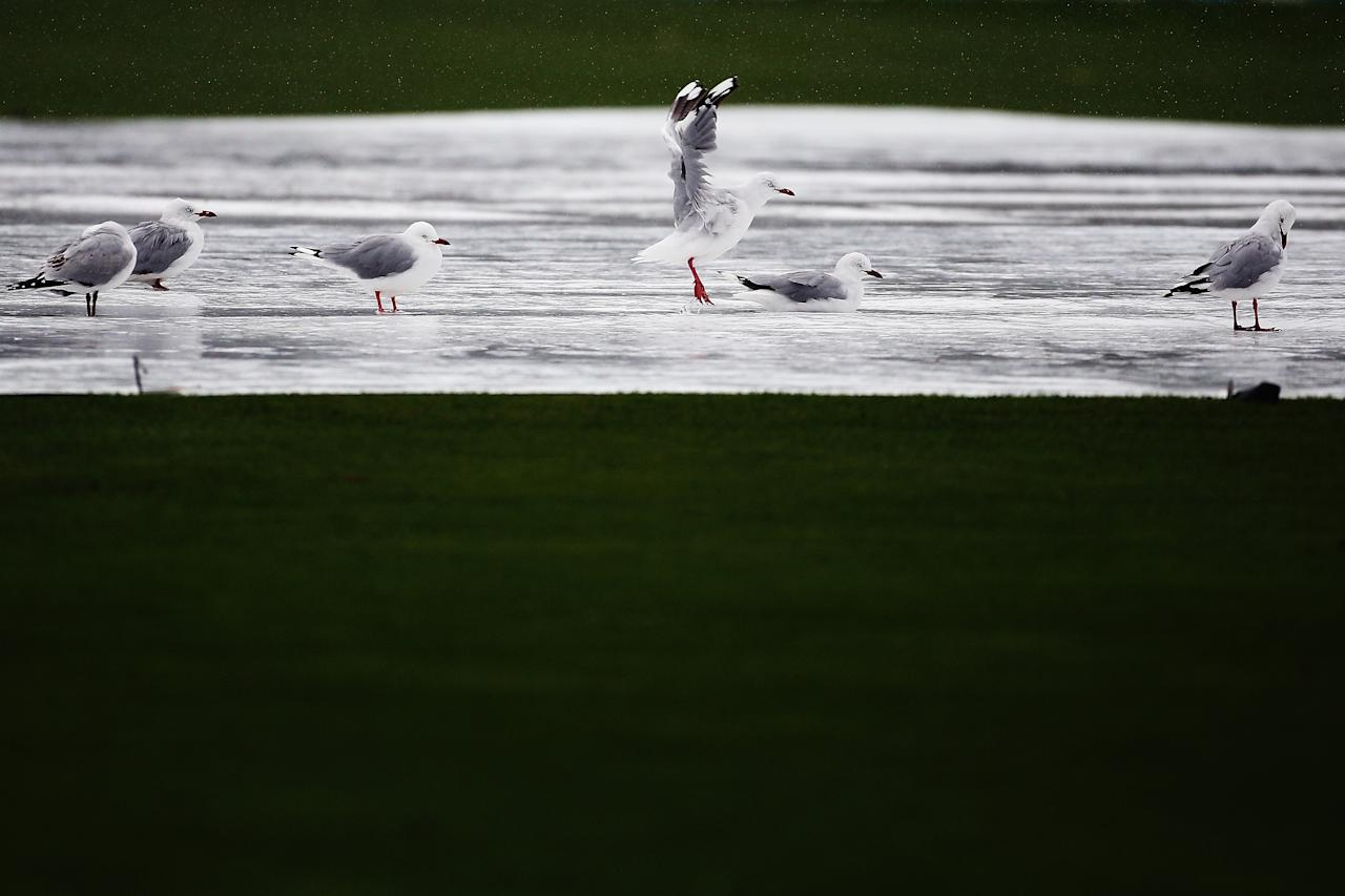 DUNEDIN, NEW ZEALAND - MARCH 06:  Seagulls bath on the pitch in the rain during day one of the First Test match between New Zealand and England at University Oval on March 6, 2013 in Dunedin, New Zealand.  (Photo by Hannah Johnston/Getty Images)