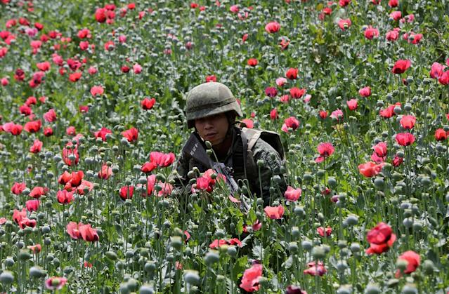 <p>A soldier is shown in a poppy field before a military operation in the municipality of Coyuca de Catalan, Mexico, April 18, 2017. (Photo: Henry Romero/Reuters) </p>