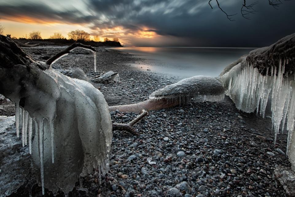 <p>Shards of ice encase huge tree trunks on the pebbly shore of Lake Ontario (Tim Corbin).</p>