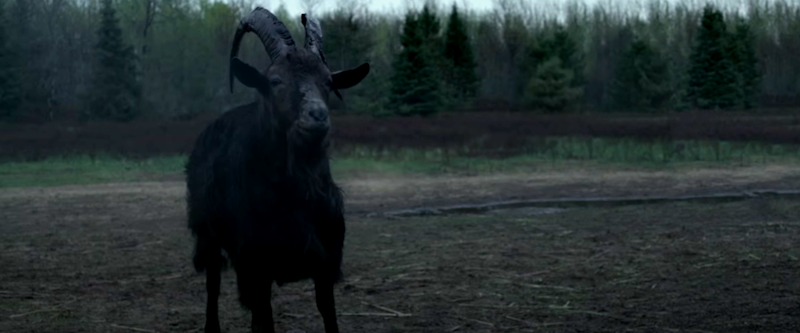 Black Phillip in The Witch. (Credit: Universal Pictures)