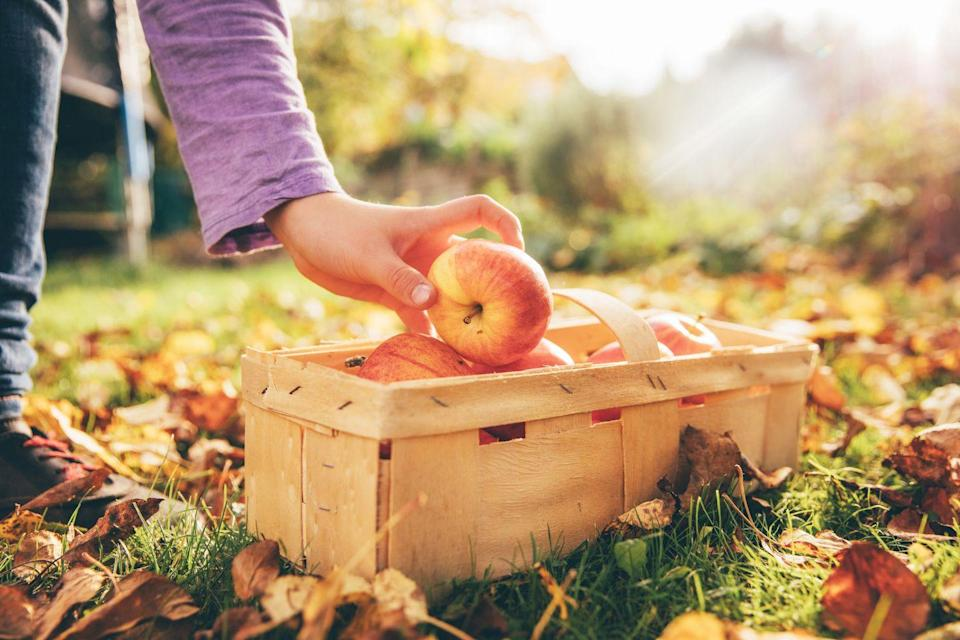 <p>Is it really the fall if you haven't gone apple picking (complete with all the accompanying Instagram photos to prove it)?</p>