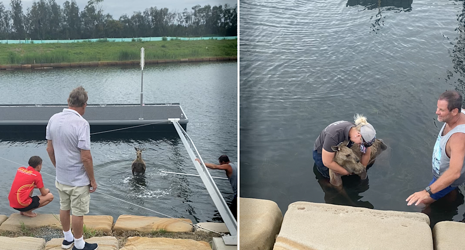Locals tried to coax the animal out of the water before WIRES rescuer Amy Wregg arrived. Source: Supplied