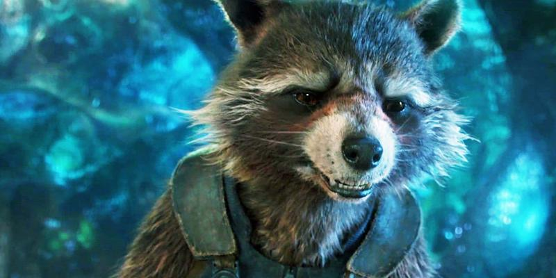 Oreo, the racoon who inspired Rocket from 'Guardians of the Galaxy