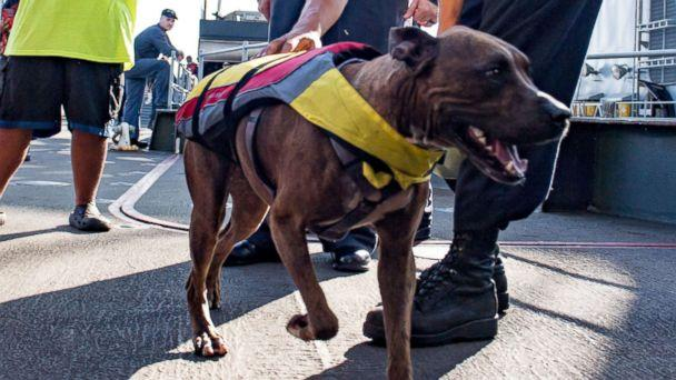 PHOTO: A sailor greets Zeus the dog with his owner Tasha Fuiaba, left, on the boat deck of the amphibious dock landing ship USS Ashland (LSD 48) after assistance was rendered to their distressed sailboat, Oct. 25, 2017. (Mass Communication Specialist 3rd Class Jonathan Clay/Navy)